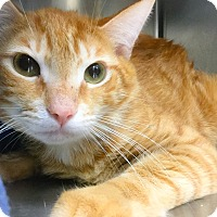 Adopt A Pet :: Pilgrim - Webster, MA