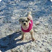 Adopt A Pet :: Camrie - Prole, IA