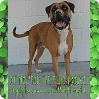 Adopt A Pet :: GUINNESS - Ocala, FL