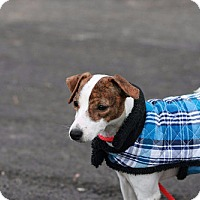 Adopt A Pet :: Rescue Trouble - Batavia, NY