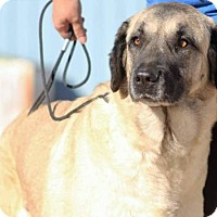 Adopt A Pet :: Ariana - Tucson, AZ