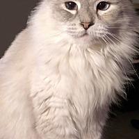 Adopt A Pet :: Peggie - San Bernardino, CA