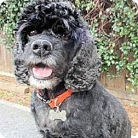 Adopt A Pet :: Ethan - Sugarland, TX