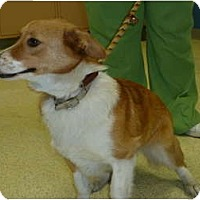 Adopt A Pet :: Socks - Inola, OK