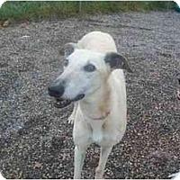 Adopt A Pet :: Zipper - Roanoke, VA