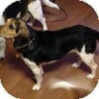 Adopt A Pet :: Chloe - Novi, MI