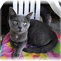 Adopt A Pet :: Mona - Shelton, WA