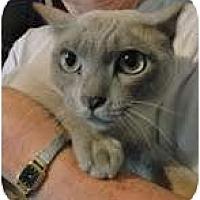 Adopt A Pet :: Romey - Arlington, VA