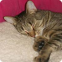 Adopt A Pet :: Lucas - Chesapeake, VA