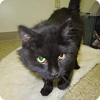 Adopt A Pet :: Ebony - Medina, OH