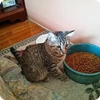 Adopt A Pet :: zz 'Tig'er' courtesy post - Cincinnati, OH