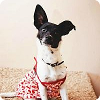 Adopt A Pet :: Daily News - Fayetteville, GA