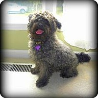 Adopt A Pet :: Chaos ~ Adoption Pending - Youngstown, OH
