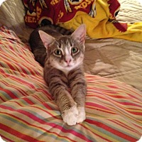 Adopt A Pet :: Willow - Spotsylvania, VA