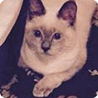 Adopt A Pet :: Chloe - Harriman, NY, NY