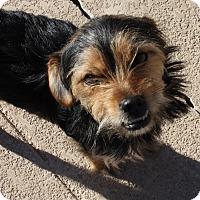 Adopt A Pet :: Fritz - Henderson, NV