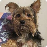 Adopt A Pet :: Reagan - Allentown, PA