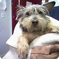 Adopt A Pet :: KUMA - Atlanta, GA