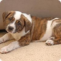Adopt A Pet :: Pat - Windermere, FL