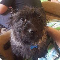 Adopt A Pet :: Ruby - Ogden, UT