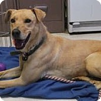Adopt A Pet :: Duke - San Francisco, CA