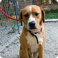 Adopt A Pet :: TREVOR - Decatur, GA