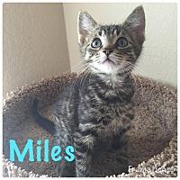 Adopt A Pet :: Miles - Arlington/Ft Worth, TX