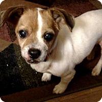 Adopt A Pet :: Precious - Elyria, OH