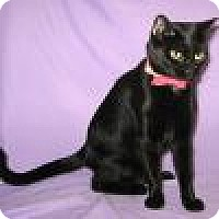 Adopt A Pet :: Rakel - Powell, OH