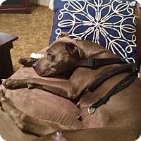 Adopt A Pet :: Blue - Manhattan, KS