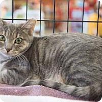 Adopt A Pet :: Brie - Merrifield, VA