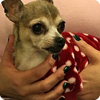 Adopt A Pet :: Penelope - Long Beach, NY