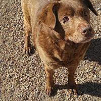 Adopt A Pet :: Kylie - Godfrey, IL