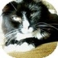 Adopt A Pet :: Alanah - Vancouver, BC