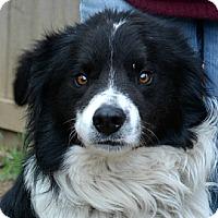 Adopt A Pet :: Keelan - Bellevue, NE