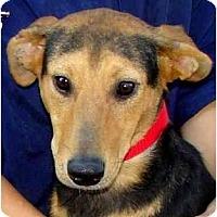 Adopt A Pet :: Penelope - Wakefield, RI
