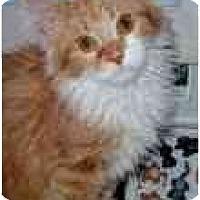 Adopt A Pet :: Ventura - Arlington, VA