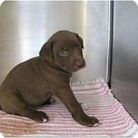 Adopt A Pet :: Hershey - Alexandria, VA