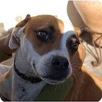 Adopt A Pet :: Kayla - Chula Vista, CA