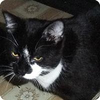 Adopt A Pet :: Caspian - Mississauga, Ontario, ON