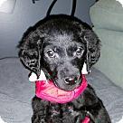 Adopt A Pet :: Champaign