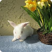 Adopt A Pet :: McIntosh - Bonita, CA