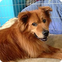Adopt A Pet :: Tess - Redondo Beach, CA