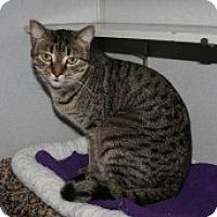 Adopt A Pet :: Jessica - Marietta, GA