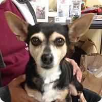 Adopt A Pet :: Endora - Studio City, CA