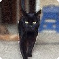 Adopt A Pet :: Jack - Manchester, CT