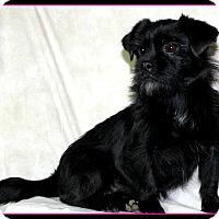 Adopt A Pet :: PENELOPE in Rogers, AR. - Little Rock, AR