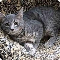 Adopt A Pet :: Loki - Gaithersburg, MD