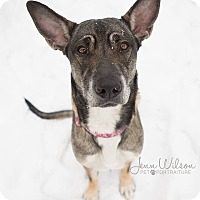 Adopt A Pet :: Hope - Drumbo, ON