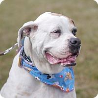 Adopt A Pet :: Jemma - Fairfax, VA